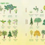 Con le mani nella terra: albi illustrati alla scoperta del mondo vegetale