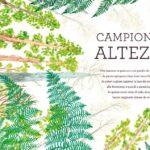 Irene Penazzi illustra Voci dal mondo verde di Editoriale Scienza