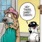 Il mistero di Get Fuzzy
