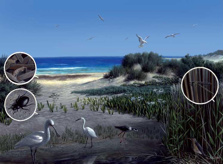 12-spiaggia-acrilico-su-car