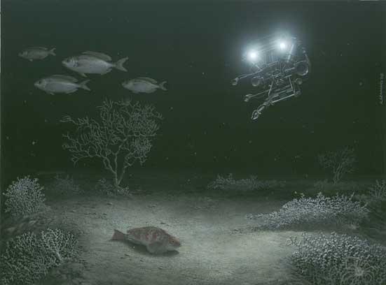 5-Coralli-di-profondità-acr