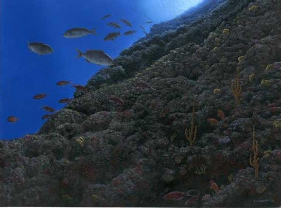 6-Coralligeno-di-parete-acr