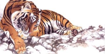 Tigre: un manhwa tra favola e naturalismo