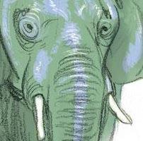 Sabato 19 Gennaio Federico Bertolucci ospite alla Fumetteria L'Elefante di Pescia