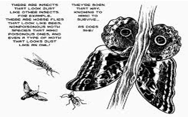 La cronaca degli insetti umani Osamu Tezuka