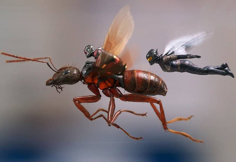 Ant-Man and The Wasp – Ali e blaster (clip dal film)