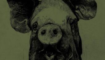 battesimo porco home